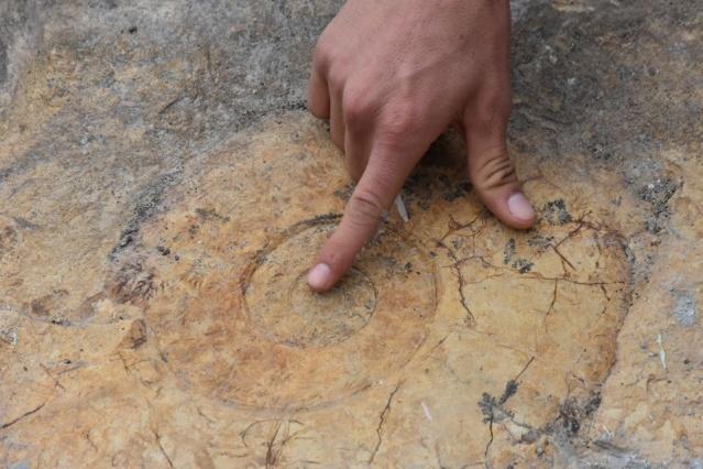 """Adıyaman Gölbaşı'da bir evde duvar taşı olarak kullanılan iki parça halindeki salyangoz fosili, müzeye taşındı. Müze Müdürü Alkan, """"Fosilin, 65 milyon yıllık olduğunu düşünüyoruz"""" dedi."""