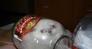 Kedilerin her yere kolaylıkla sığabileceğini kanıtlayan fotoğraflar