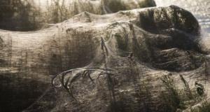 Yunanistan'ı örümcek ağları sardı