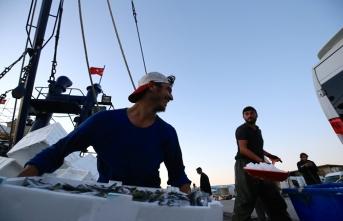 Balıkçıların yüzü bol istavrit ile güldü