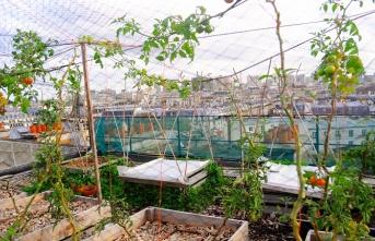 Paris'te çatılar tarım alanı oldu
