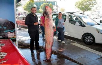 2 metrelik yayın balığı görenleri şaşırttı