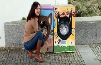 Bozuk çamaşır makineleri kedi evi oldu