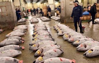 Dünyanın en büyük balık pazarı taşınıyor