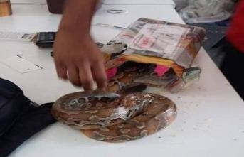 Kargo paketinden yılan çıktı