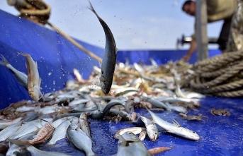 Balıkçıların yüzü 'destek' ile gülmeye başladı