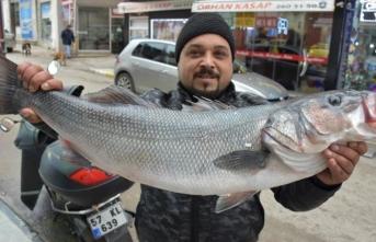 Karadenizli balıkçılarda levrek sevinci