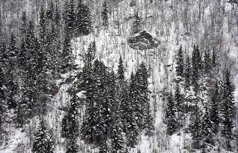 Örümcek Ormanları'nda kar manzarası büyülüyor
