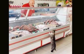 Herkes bu fotoğrafla tanımıştı... O kedi öldü