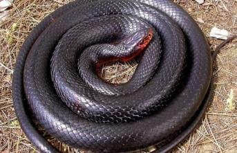 Tatil cennetinde kara yılan uyarısı