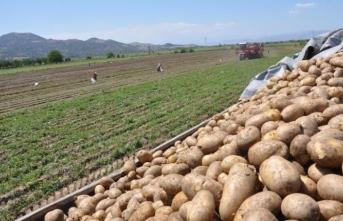 Patatese vergi ayarı!