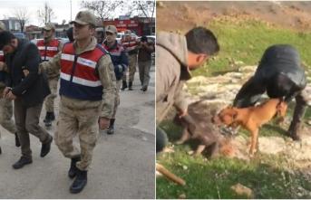 Şanlıurfa'da koruma altındaki oklu kirpinin öldürülmesi: 3 gözaltı