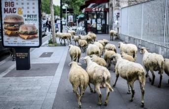 Bu okulda koyunlar kayıtlı!