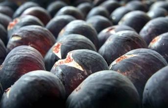 Köyün nüfusu, incir hasadında 3 katına çıkıyor!