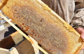2 bin 500 rakımda bal hasadı