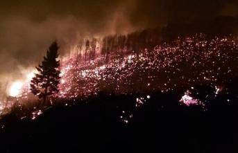 Ciğerlerimiz yanıyor! 4 ilde ve 26 noktada orman yangını!