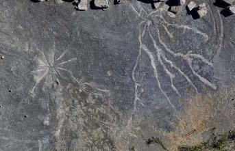 Dünyanın en eski ağaç fosilleri bulundu! Tam 386 milyon..