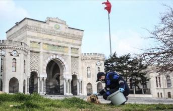 İstanbul'daki belediyeler sokak hayvanlarına sahip çıkıyor