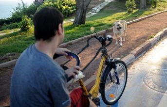 Sokak köpeği, engelli genci az kalsın öldürüyordu
