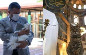 Ayasofya'nın ünlü kedisi Gli'nin artık Ankaralı arkadaşı var