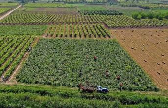 Çiftçiler dikkat: Süresi uzatıldı