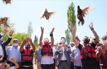 Tokat'ta 'kene avcısı' bin keklik ve sülün doğaya salındı