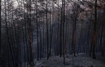 Yangınında zarar gören alan ağaçlandırılacak