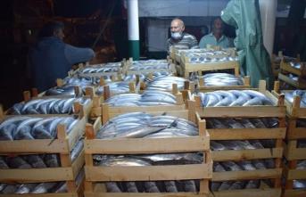 Balıkçılar Akçakoca Limanı'na binlerce palamutla döndü