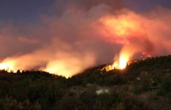 İki ilçede orman yangını!