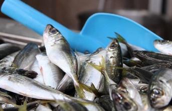 Balıkçılar yeni sezondan umutlu