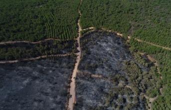 Yangında zarar gören bölge yeniden ağaçlandırılacak