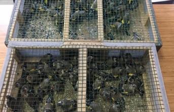Adana'da tuzakla saka kuşu avlayan baba ve oğluna 91 bin 350 lira ceza