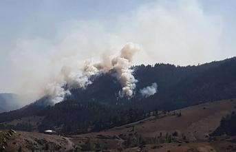 Adana'da orman yangını: Müdahale sürüyor