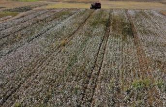 Antalya'da beyaza bürünen tarlalarda pamuk hasadı heyecanı