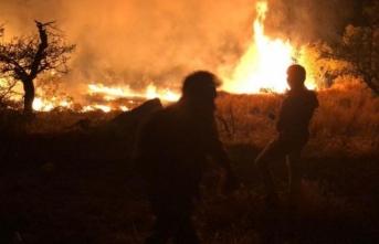 Aydın Germencik'te orman yangını
