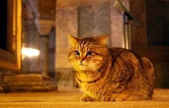Vali Yerlikaya duyurdu, 'Ayasofya'nın kedisi' Gli'den kötü haber
