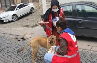 Kızılay gönüllüleri sokak hayvanlarını unutmadı
