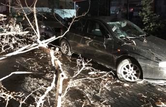 Çınar ağacı araçların üzerine devrildi