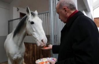 Cumhurbaşkanı Erdoğan, atı elleriyle besledi