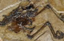 110 milyon yıllık kuş fosili bulundu