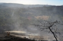 Manisa'da orman yangını yerleşim yerlerine...