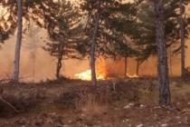 Ormanlık alanda korkutan yangın!
