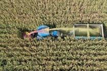 'Doğu'nun Çukurovası'nda silajlık mısır hasadı başladı