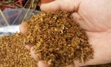 'Tütün çiğneyenler de kanser oluyor'