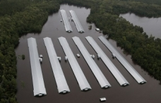 Kasırgada 1,7 milyon tavuk telef oldu