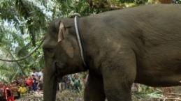 Endonezya'da filin yeri değiştirildi