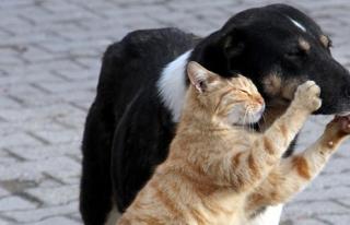 Kedi ve köpeğin dostluğu   VIDEO