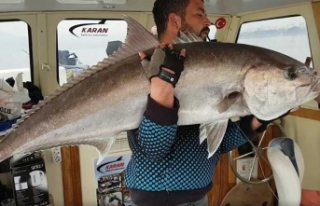 Lagos balığına ince ayar