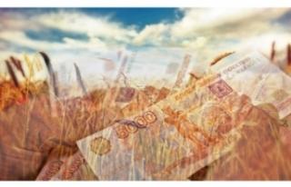 Buğdayda ruble dönemi