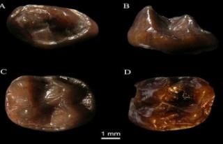 Dünyanın en küçük maymun fosili bulundu